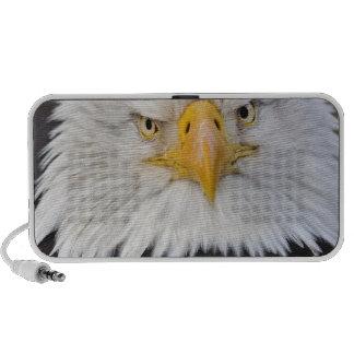Bald Eagle Portrait, Bald Eagle in flight, Mp3 Speakers
