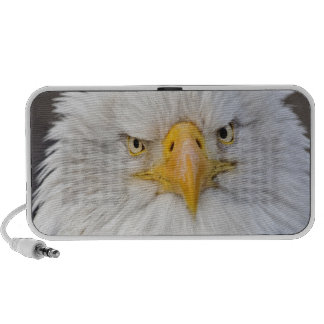 Bald Eagle Portrait, Bald Eagle in flight, Laptop Speaker