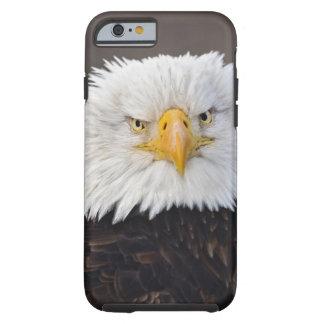 Bald Eagle Portrait, Bald Eagle in flight, Tough iPhone 6 Case