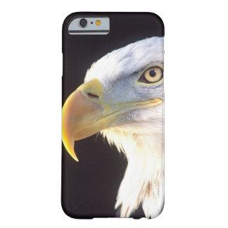Bald Eagle Portrait, Haliaeetus leucocephalus, Barely There iPhone 6 Case