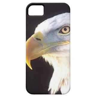 Bald Eagle Portrait, Haliaeetus leucocephalus, iPhone SE/5/5s Case