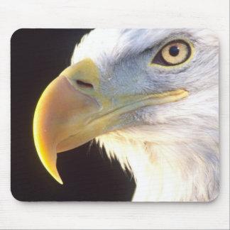 Bald Eagle Portrait, Haliaeetus leucocephalus, Mouse Pad
