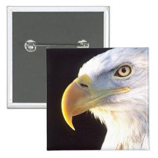 Bald Eagle Portrait, Haliaeetus leucocephalus, Pinback Button