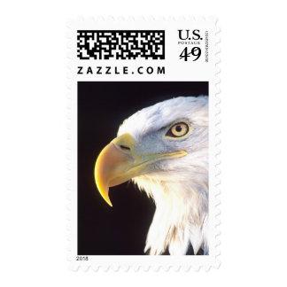 Bald Eagle Portrait Haliaeetus leucocephalus Stamps