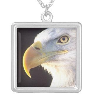 Bald Eagle Portrait, Haliaeetus leucocephalus, Square Pendant Necklace