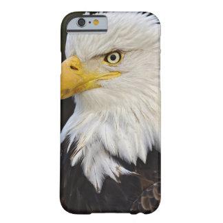 Bald Eagle portrait, Haliaetus leucocephalus, Barely There iPhone 6 Case