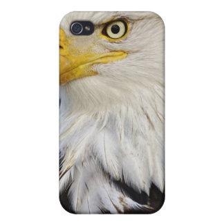 Bald Eagle portrait, Haliaetus leucocephalus, iPhone 4 Cover