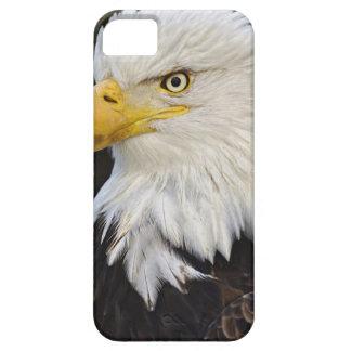 Bald Eagle portrait, Haliaetus leucocephalus, iPhone SE/5/5s Case