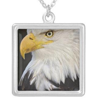 Bald Eagle portrait, Haliaetus leucocephalus, Silver Plated Necklace