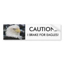 Bald Eagle Portrait Photo Bumper Sticker