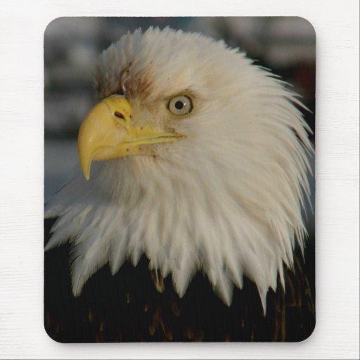 Bald Eagle Portrait Photo Mouse Pad