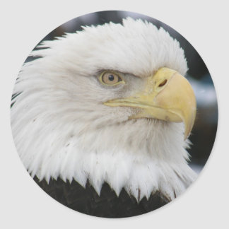 Bald Eagle Portrait Photo Classic Round Sticker