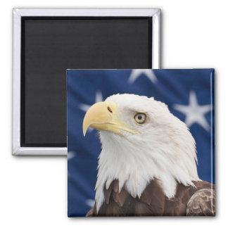 Bald Eagle Portrait with stars Magnet