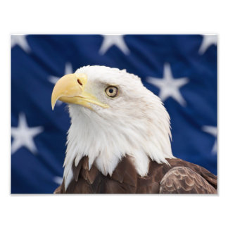 Bald Eagle Portrait with stars Photo