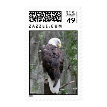 Bald Eagle Postage Stamps