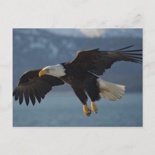 Bald Eagle zazzle_postcard