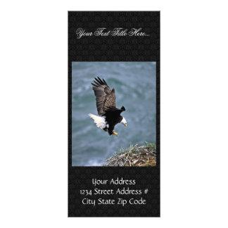 Bald Eagle Rack Card