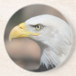 Bald Eagle Raptor Bird of Prey Coasters