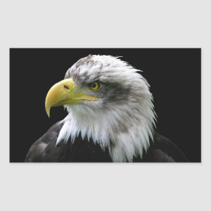 Bald Eagle Rectangular Sticker