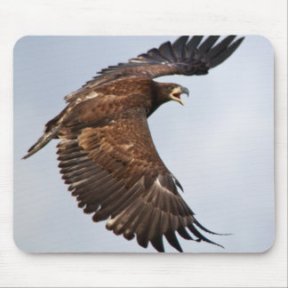 Bald Eagle shouting Feed Me Mouse Pad