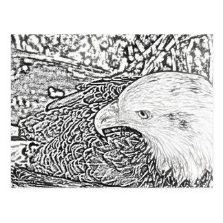bald eagle sketch bw sideways bird animal feather postcard