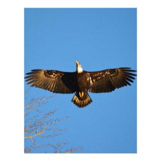 Bald Eagle Soaring1 Letterhead