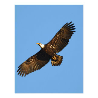 Bald Eagle Soaring 2 Letterhead