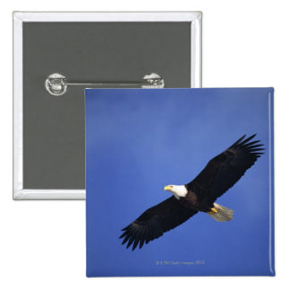 Bald eagle soaring , Alaska Buttons