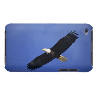 Bald eagle soaring , Alaska iPod Touch Case