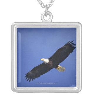 Bald eagle soaring , Alaska Silver Plated Necklace