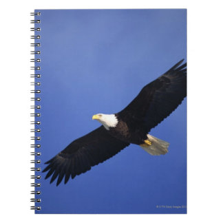 Bald eagle soaring , Alaska Spiral Notebook