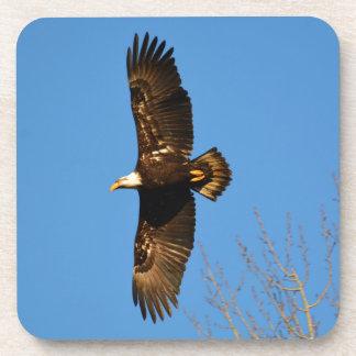 Bald Eagle Soaring Over Trees Coaster