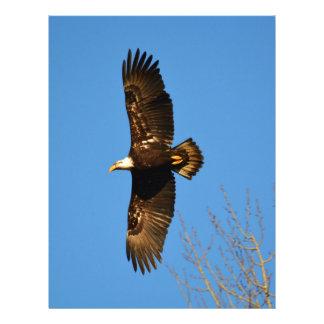 Bald Eagle Soaring Over Trees Letterhead
