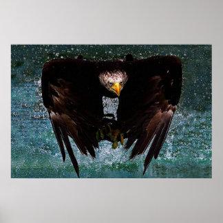 Bald Eagle splash poster