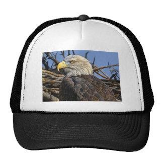 Bald Eagle Spring Nest Ball Cap Trucker Hat