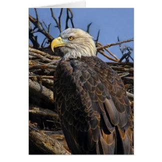 Bald Eagle Spring Nest Card