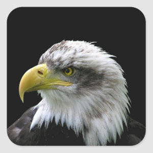 Bald Eagle Square Sticker