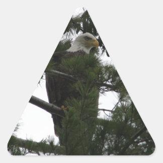 Bald Eagle Triangle Sticker