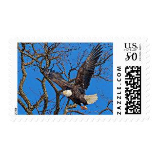 Bald Eagle taking flight Postage