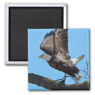 Bald Eagle taking off Magnet