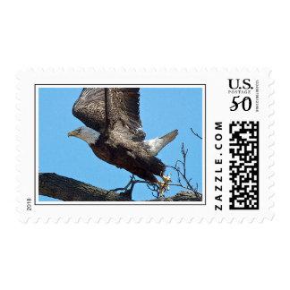 Bald Eagle taking off Postage