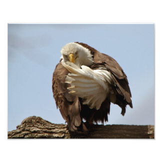 Bald Eagle (The bird giving the bird) Photo Art