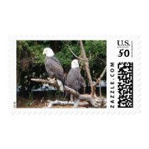 Bald Eagle US Postage Stamp Wildlife USA