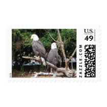 Bald Eagle US Postage Stamp Wildlife USA