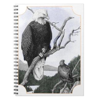 Bald Eagle Vintage Illustration Notebook
