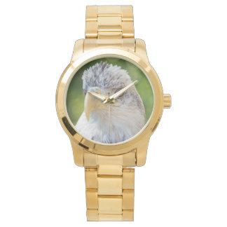 Bald Eagle Watch