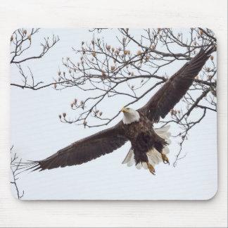 Bald Eagle Wingspread Mouse Pad