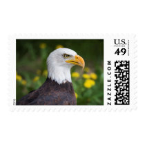 Bald Eagle with Dandelions 49 cent postage stamps