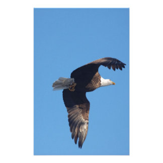 bald eagle with fish stationery