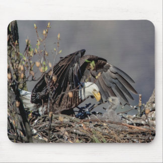 Bald Eagle with her baby Mouse Pad